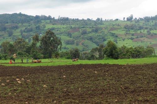 Maize-based smallholder farming system in sub-Saharan Africa. Photo: Dagne Wegary/CIMMYT