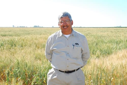 Julio Huerta stands in a wheat field in Ciudad Obregon. Photo: Xochiquetzal Fonseca/CIMMYT.