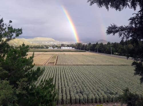 A rainbow appears over the fields at CIMMYT's global headquarters in Mexico. (Photo: H. Velazquez Miranda/CIMMYT)