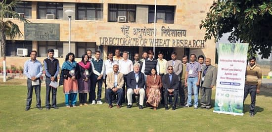 The wheat plant protection group attend interactive group meeting at IIWBR, Karnal, India. Photo: CIMMYT