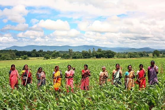 Women farmers in the plateau region of Odisha play an integral role in increasing maize productivity. Photo: Srikanth Kolari/CIMMYT