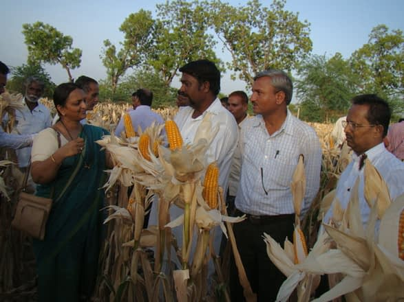 Caption: Chetana Patil, Joint Director of Agriculture (left), discusses the strength of new heat-tolerant maize hybrids with farmers. Photo: UAS, Raichur