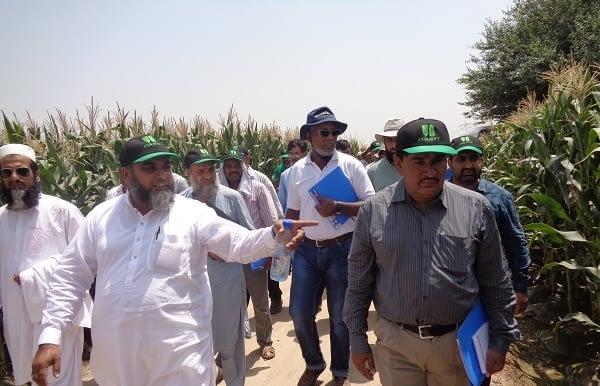 Participants of maize travelling seminar visiting maize activities at MMRI-Sahiwal, Pakistan, 2017. Photo: E.Shakeel/CIMMYT