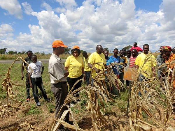 Kamano Seed Company works with extension agencies to train smallholder farmers on quality standards, field inspection and isolation distances to ensure the seed they produce meets the required standards. Photo: Kamano Seed Company