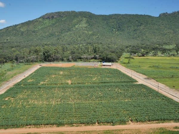 An aerial view of the MLN quarantine facility in Zimbabwe. Photo: Mainassara Zaman-Allah/CIMMYT
