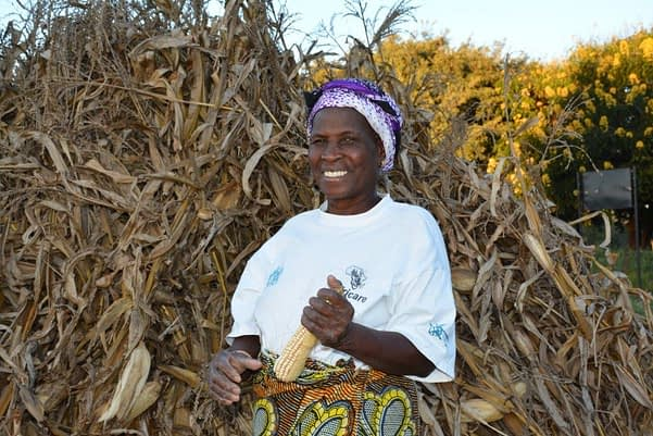 Margaret Chisangano harvested and sold 25 tons of drought tolerant maize from her 7-hectare plot in 2015, from 7.5 tons the previous season. This year, she expects to double her yields. With the extra income, Chisangano can feed her entire family and buy clothes, medicine and school supplies for her grandchildren. Photo: Johnson Siamachira/CIMMYT