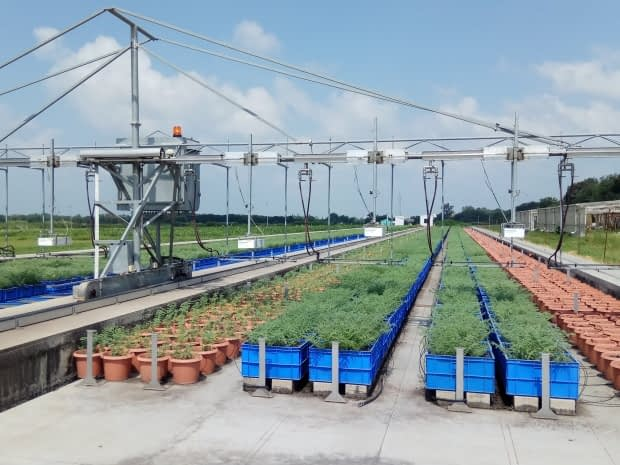 A high throughput crop phenotyping platform, the 'Leasyscan' located at ICRISAT's HQ Patancheru, India. Photo: A. Whitbread (ICRISAT)