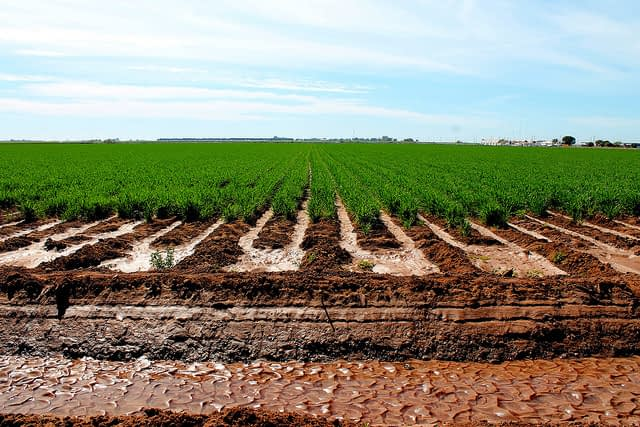 Healthy soils are vital for a healthy and food secure future. (Photo: CIMMYT)