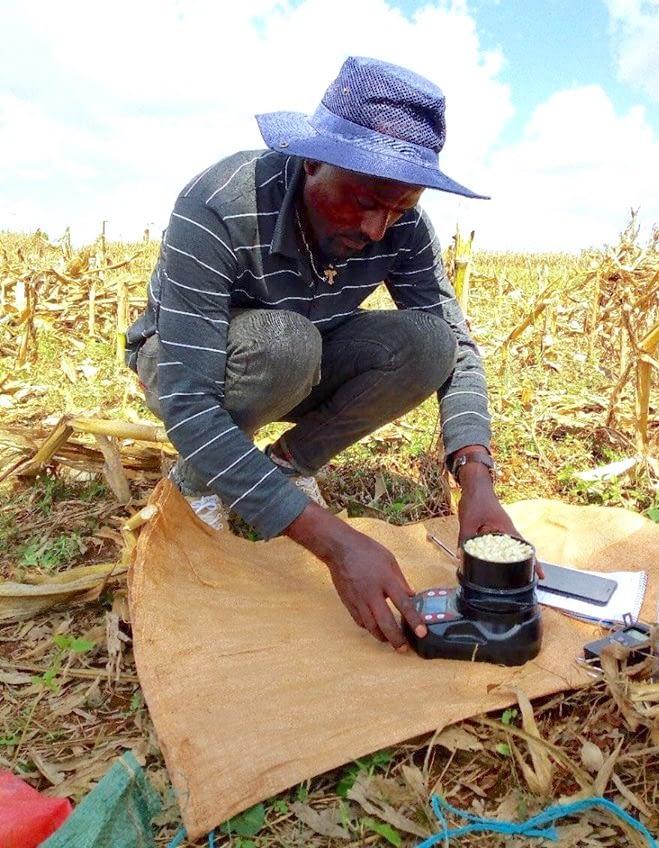 An enumerator in Ethiopia measures grain moisture. (Photo: Hailemariam Ayalew/CIMMYT)