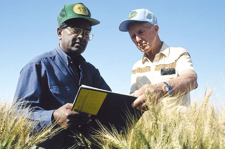 Norman Borlaug (right) in the field with Sanjaya Rajaram, his successor as head of CIMMYT's wheat program. (Photo: Gene Hettel/CIMMYT)