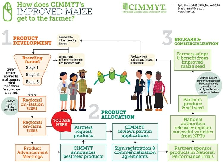 How does CIMMYT's improved maize get to the farmer?