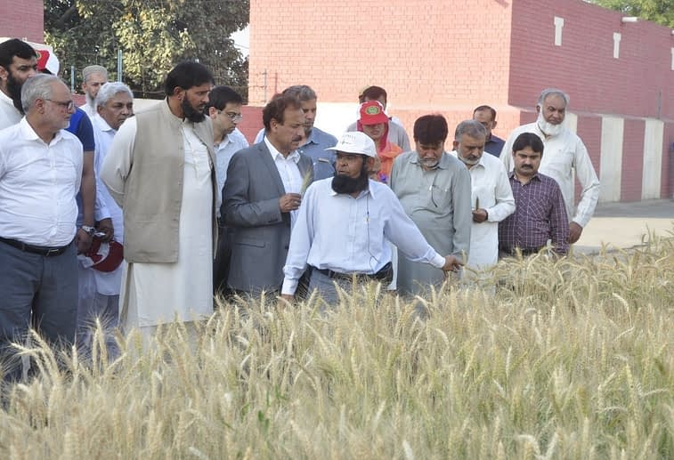Wheat breeder and WRI director Javed Ahmad (center, wearing a white cap) explains the performance of a new variety and its positive traits to visitors. (Photo: Muhammad Shahbaz Rafiq)