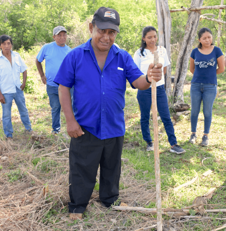 Francisco Canul Poot in his land. (Photo: CIMMYT)