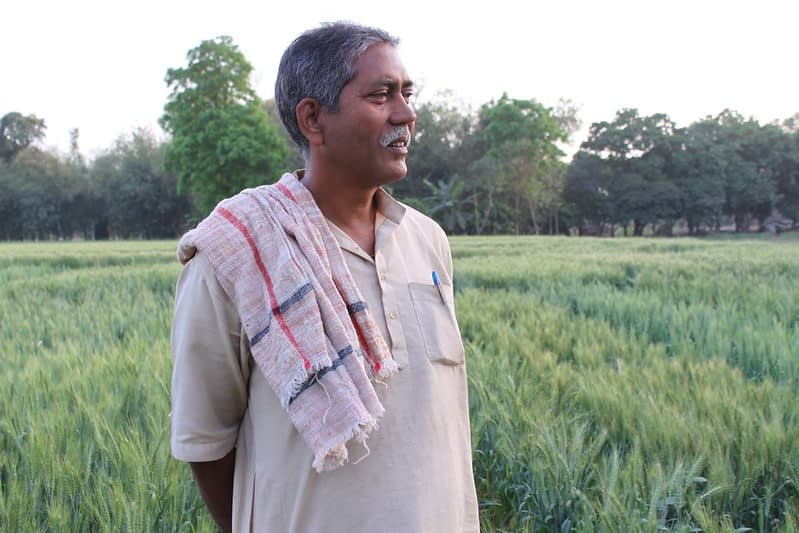 Farmer Raj Narayin Singh stands in his wheat field in Bihar, India. (Photo: Petr Kosina/CIMMY)