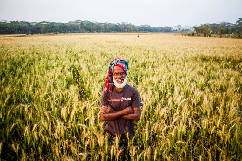 Farmer Tara Miah stands in his wheat field in Rajguru, Barisal, Bangladesh. (Photo: Ranak Martin/CIMMYT)