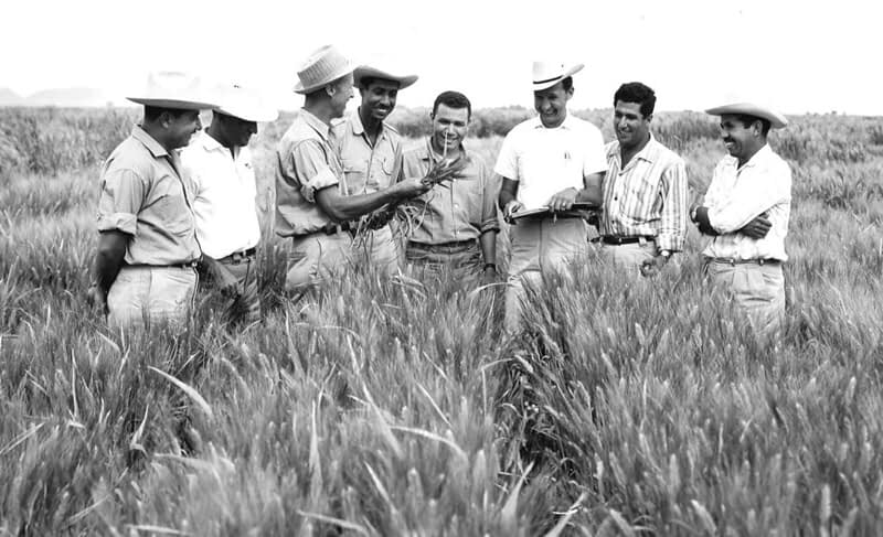 Norman Borlaug teaches a group of young trainees in the field in Sonora, Mexico. (Photo: CIMMYT)