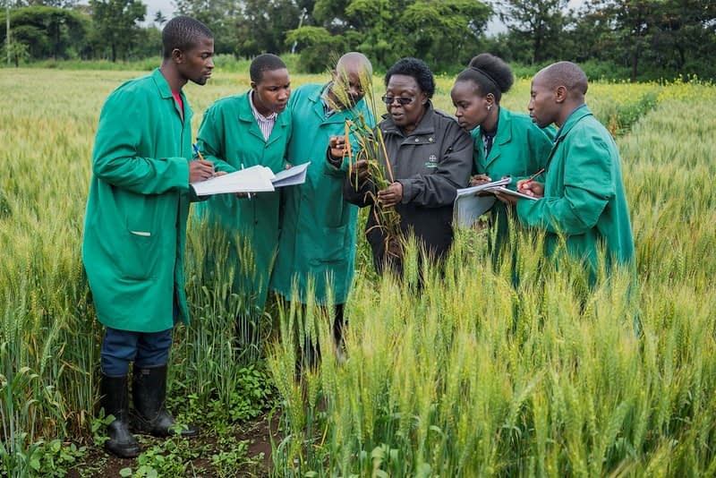 National Wheat Coordinator Ruth Wanyera (third from right) gives a lesson to pathology interns in the field of a fungicide efficiency trial at KALRO Njoro Research Station, Nakuru, Kenya.