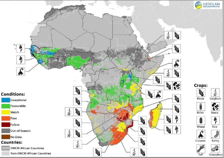 Crop conditions at a glance as of January 28. (Source: Geoglam Global Agricultural Monitoring)