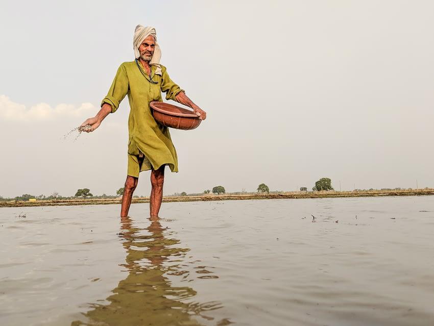 A farmer in Ara district, Bihar state, applies NPK fertilizer, composed primarily of nitrogen, phosphorus and potassium.
