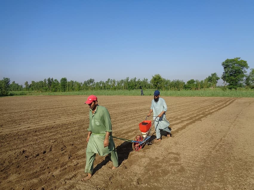 Maize farmer Jalees Ahmed (right) operates his push row planter. (Photo: Kashif Syed/CIMMYT)