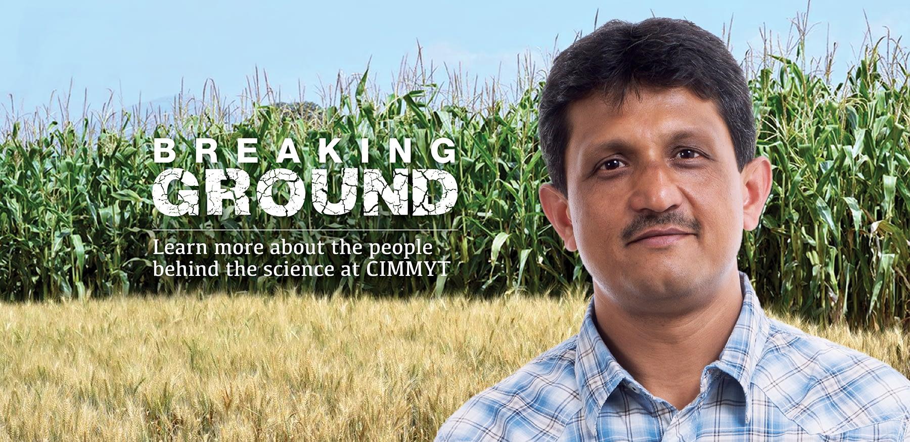 Background image for CIMMYT